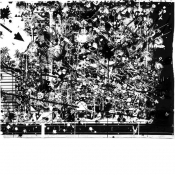 1995-01-03